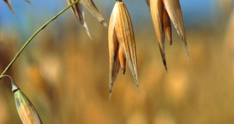 O medicamento GlutenEase é ou não seguro para o tratamento de doença celíaca?