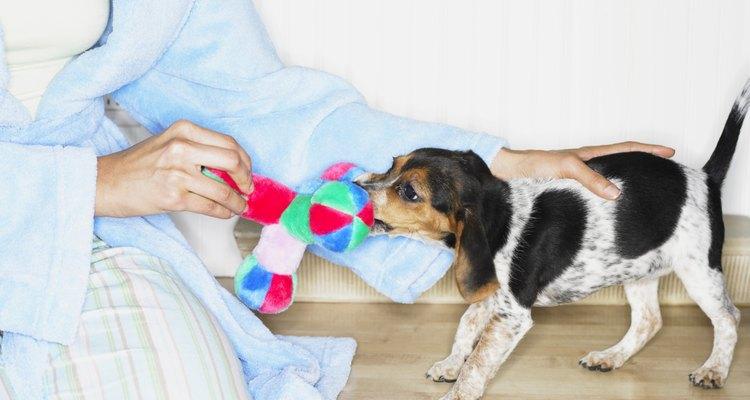 Los perros pueden pelearse por un juguete.