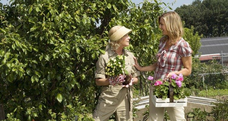 Ninguna planta crece sin la tierra y nutrición adecuadas.