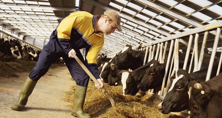 Los zoólogos se encargan de que los animales se alimenten bien.