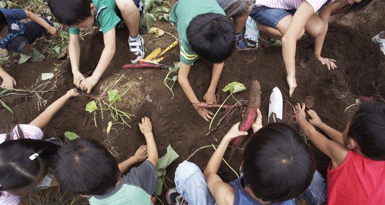 Las plantas necesitan tierra blanda para que puedan crecer.