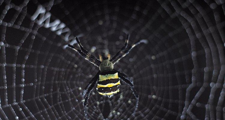 Spiders aren't always welcome guests.