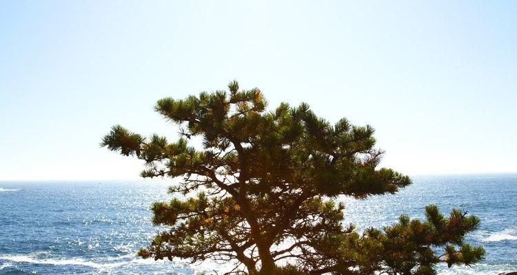Los insectos barrenadores del árbol son un plaga que infecta árboles y arbustos.
