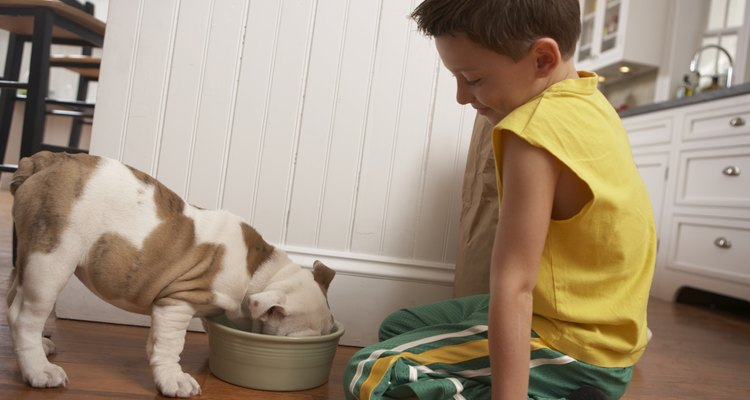 La B12 se utiliza con frecuencia en los perros para aumentar su apetito.
