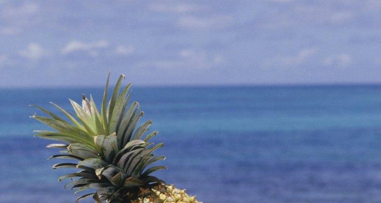 Las frutas tropicales crecen y se cultivan en climas cálidos.