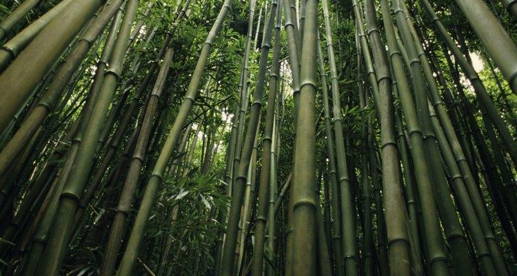 Aprende sobre el bambú para poder trabajar con él.