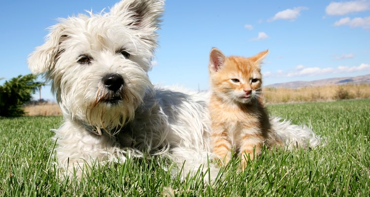 Un gato y un perro.