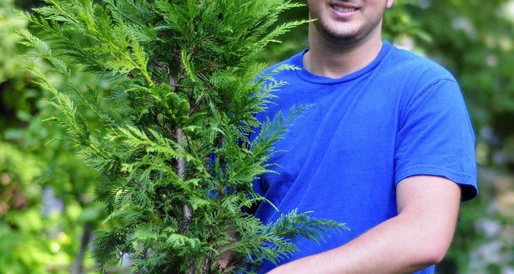Planta cipreses de Leyland siguiendo estos pasos.