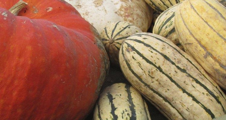 Delicata Squash And Pumpkins