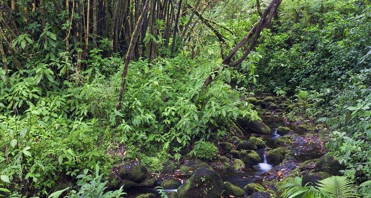 Los bosques tropicales del mundo son ricos en vegetación exótica y tropical.