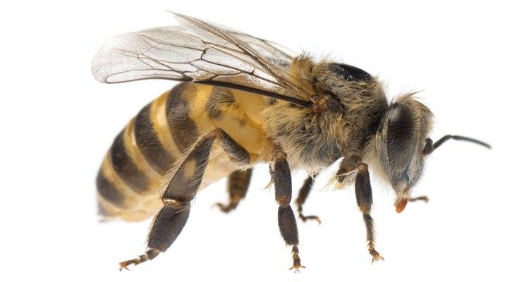 Construye tu propio ahumador para abejas.