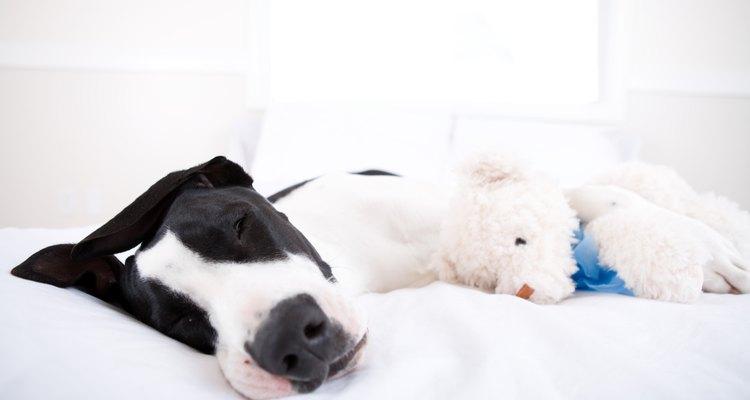 Un perro enfermo puede volverse letárgico.