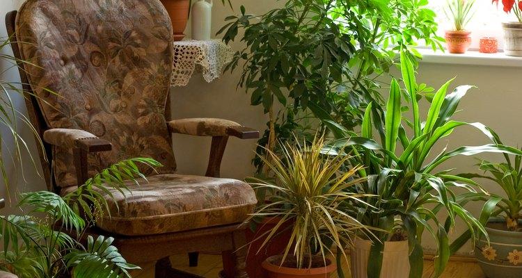 Plantas caseiras