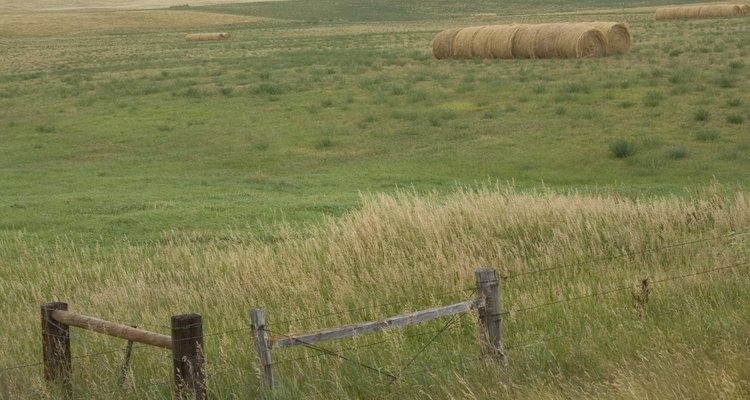 A América do Norte tem pradarias temperadas