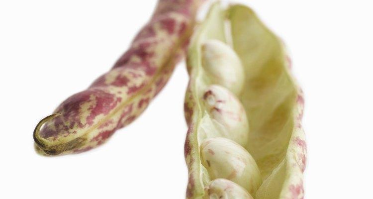 Las habas o las vainas de caballo crecen en vainas grandes llenas de granos de cáscara carnosas.