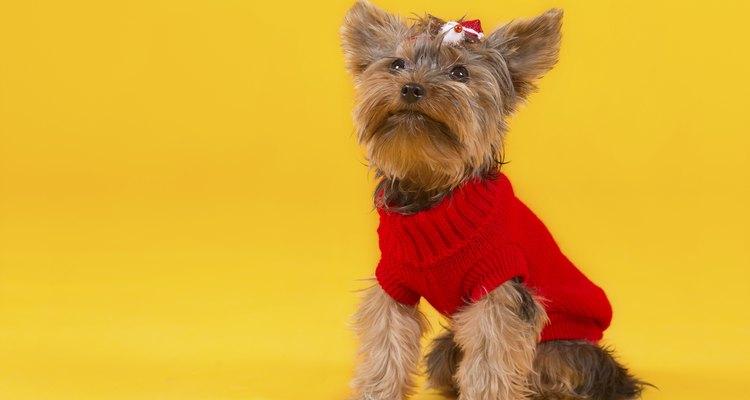 Small dogs appreciate warm clothing in the winter.