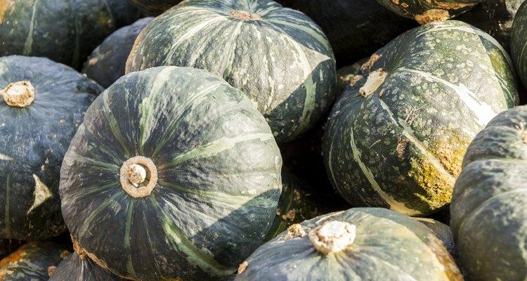 Green Grüner Hokkaido cucurbita pumpkin pumpkins from autumn ha