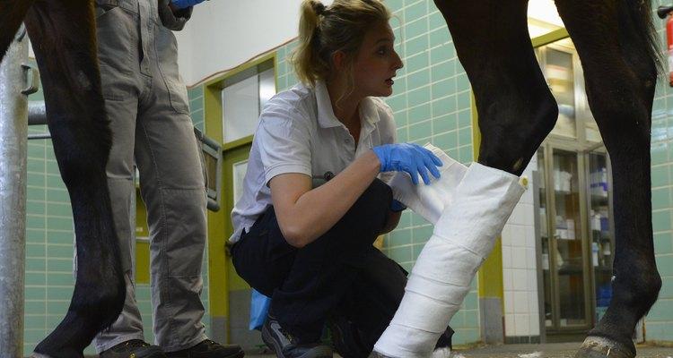 Un caballo con cualquier tipo de lesión requiere de atención veterinaria.