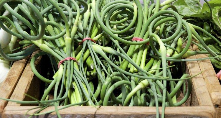Garlic scapes (green garlic tops) at the farmer's market