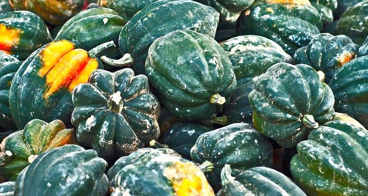Acorn Squash Autumn Harvest