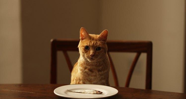 Crea un dispensador de comida para tus gatos usando elementos de tu casa.