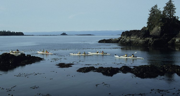 Los tours en kayak están disponibles dentro y en los alrededores de Victoria, Canadá.
