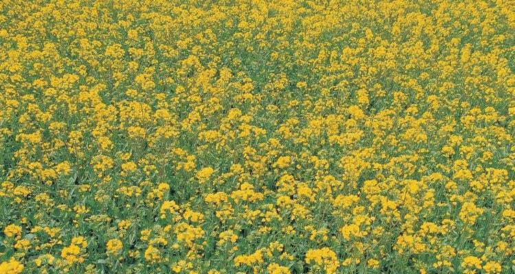 Los prados y campos son hábitats de estos tres insectos.