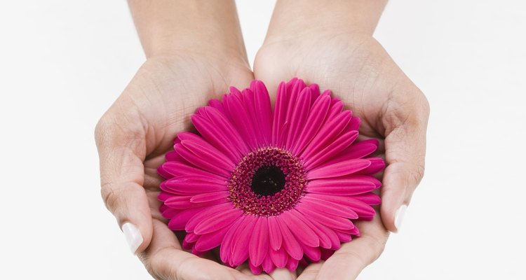 Pon margaritas de colores brillantes en una cesta de flores veraniega.