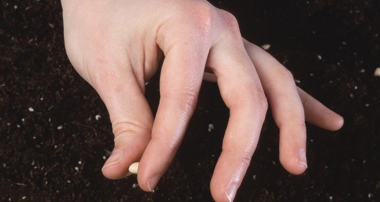 Coloca una semilla en el agujero y cúbrela con tierra.