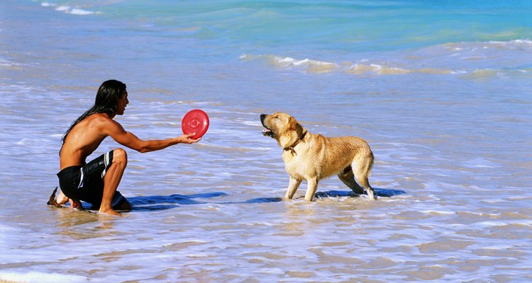 Man and dog in ocean surf Man holding  plastic toy
