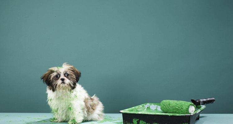 Repelentes para cachorros podem ser feitos com ingreditentes caseiros