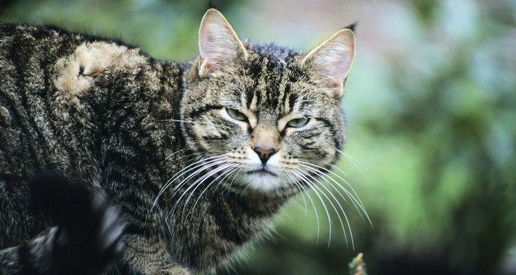 Los ruidos agudos y fuertes tienden a molestar a los gatos.