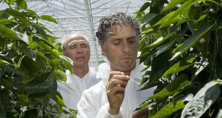 Las plantas pueden crecer en una mezcla de agua y nutrientes