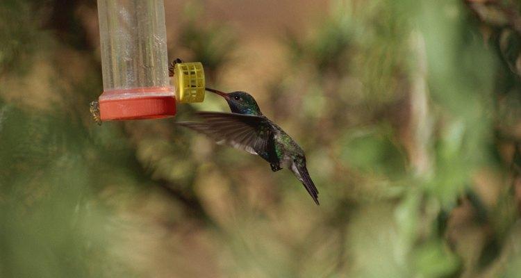 Las disoluciones transparentes son mejores para los comederos de colibríes.