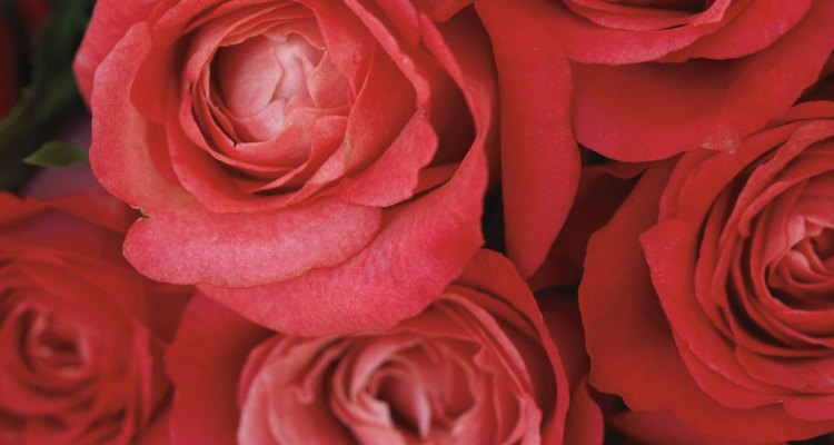 Las rosas son la flor de la pasión, mientras que los rubíes son las gemas del amor.