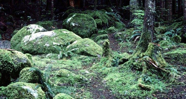 O chão da floresta tropical é quase sempre escuro e úmido