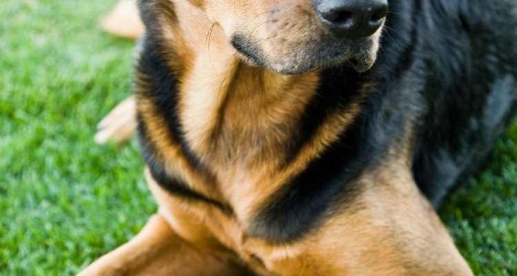 There are plenty of creams and lotions readily available to help prevent itchiness in your dog.