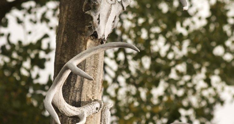 Forma los cuernos del fauno con papel maché.