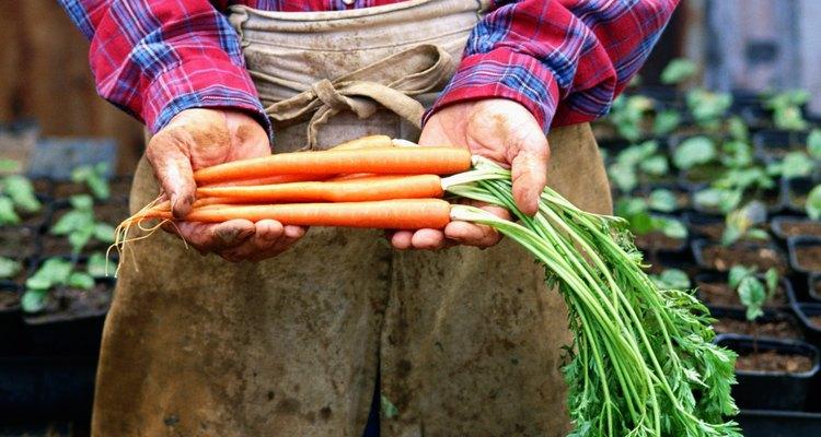Las zanahorias usan poca profundidad de suelos.