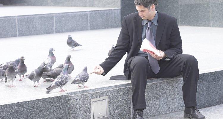 Pombos gostam de comer grãos e sementes, mas também comem restos de comida humana