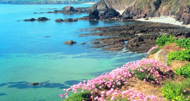 Las plantas que crecen en la playa deben ser tolerantes a la sal y al viento.