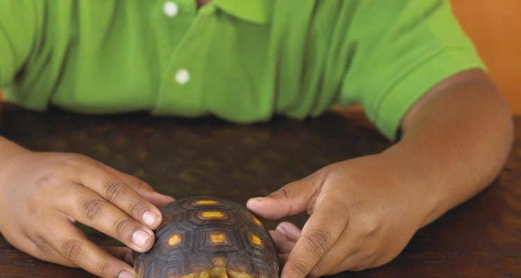 Lave as suas mãos após manipular uma tartaruga