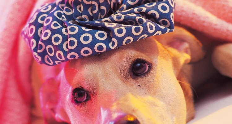 Aplique uma compressa quente no local da dor do seu cão
