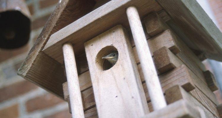 Los pájaros prefieren construcciones simples y colores neutros.
