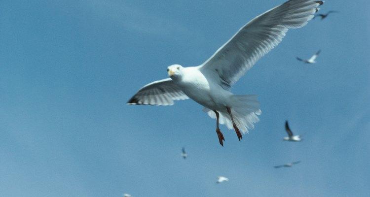 Las poblaciones de aves ayudan a mantener un ecosistema forestal.
