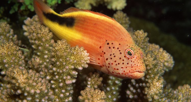 Phosphate and aluminium can jeapordize the health and stability of both freshwater and saltwater aquarium systems.