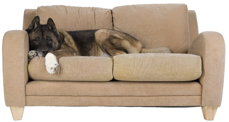 If you have pets, the life of your sofa will likely be reduced.
