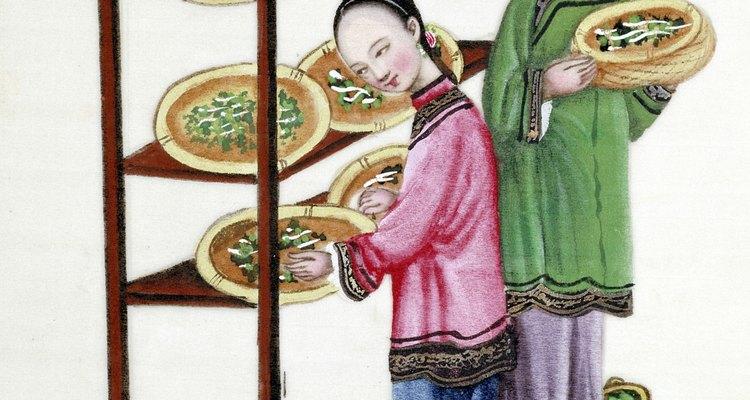 Desde la antiguedad se sabe que los gusanos de seda sólo se alimentan de las hojas de la morera.