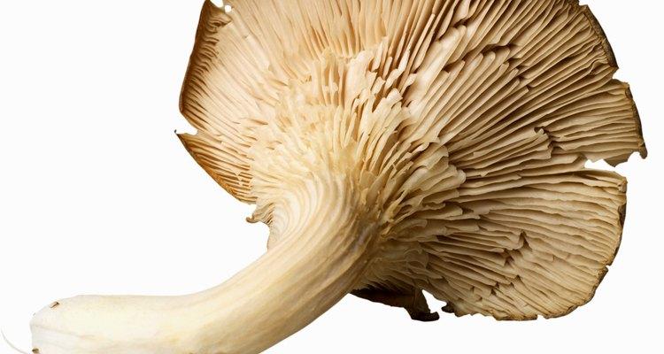 As vendas comerciais de cogumelos atingiram dois bilhões de Reais na alta estação de 2010-11