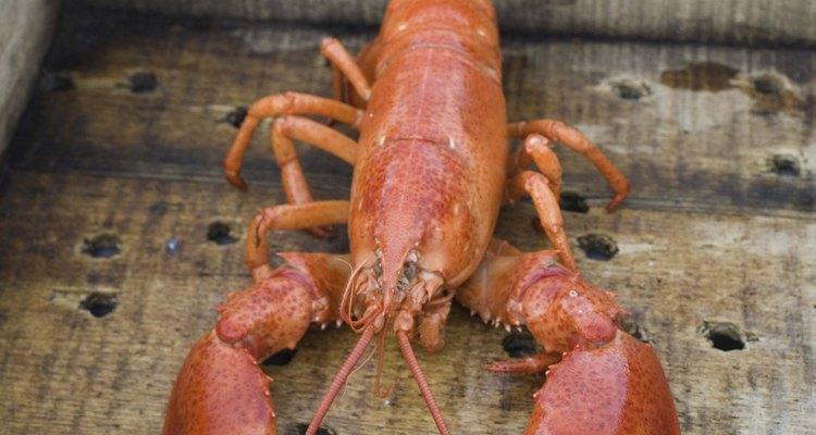 La mayoría de crustáceos se atrapan usando trampas para langosta.